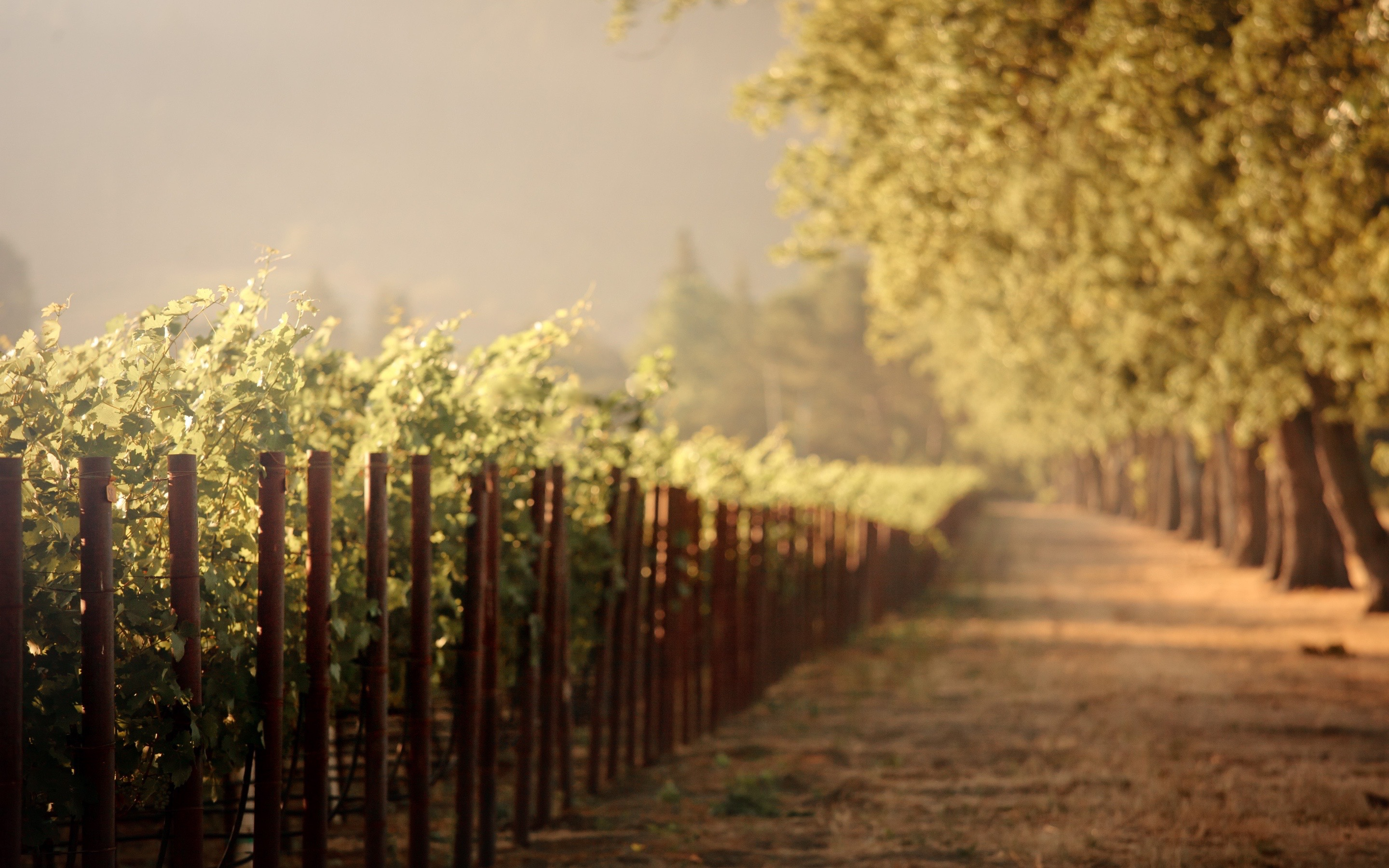 6977016-sunrise-vineyard-2